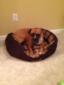 Loving her new doggie bed.