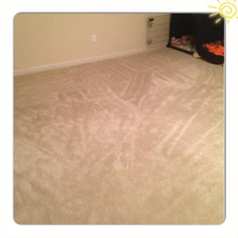 crazy carpet